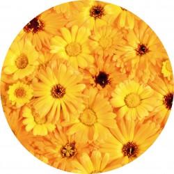 PICTURE DISC fleur 2